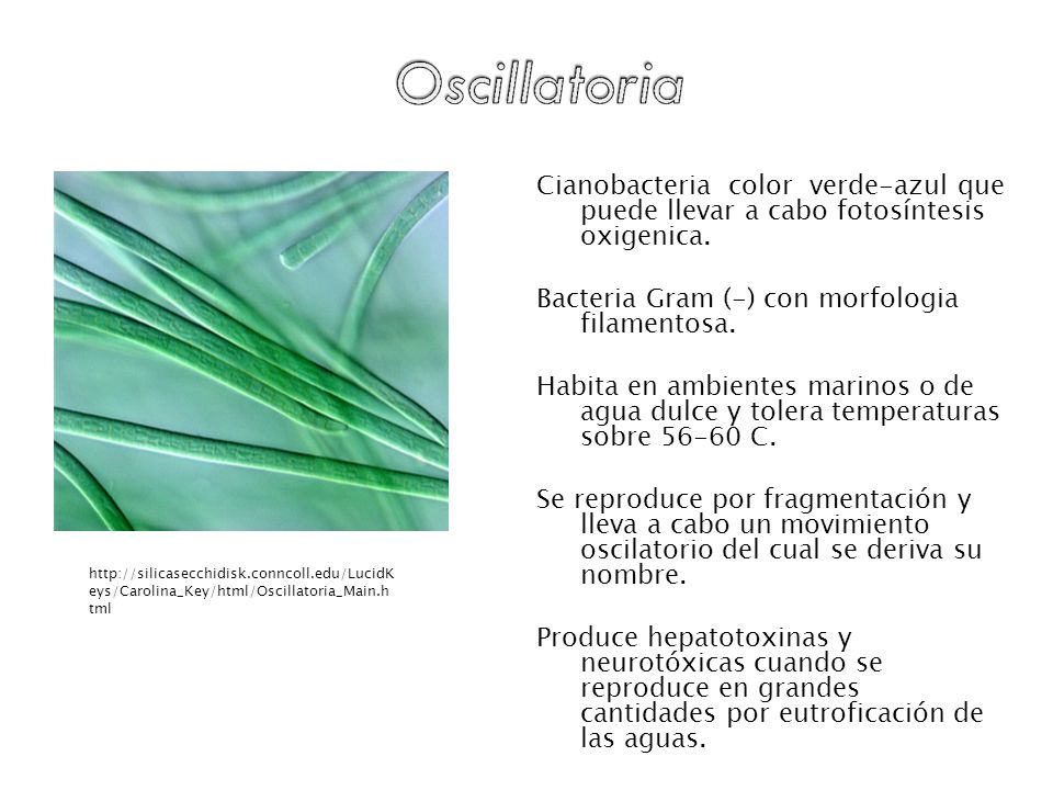 Bacteria Gram (-) con morfologia filamentosa.