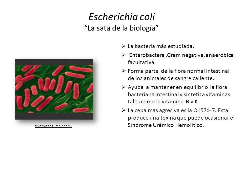 Escherichia coli La sata de la biología