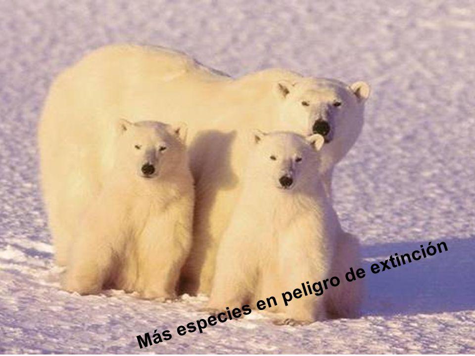 Más especies en peligro de extinción