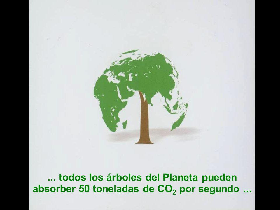 ... todos los árboles del Planeta pueden absorber 50 toneladas de CO2 por segundo ...
