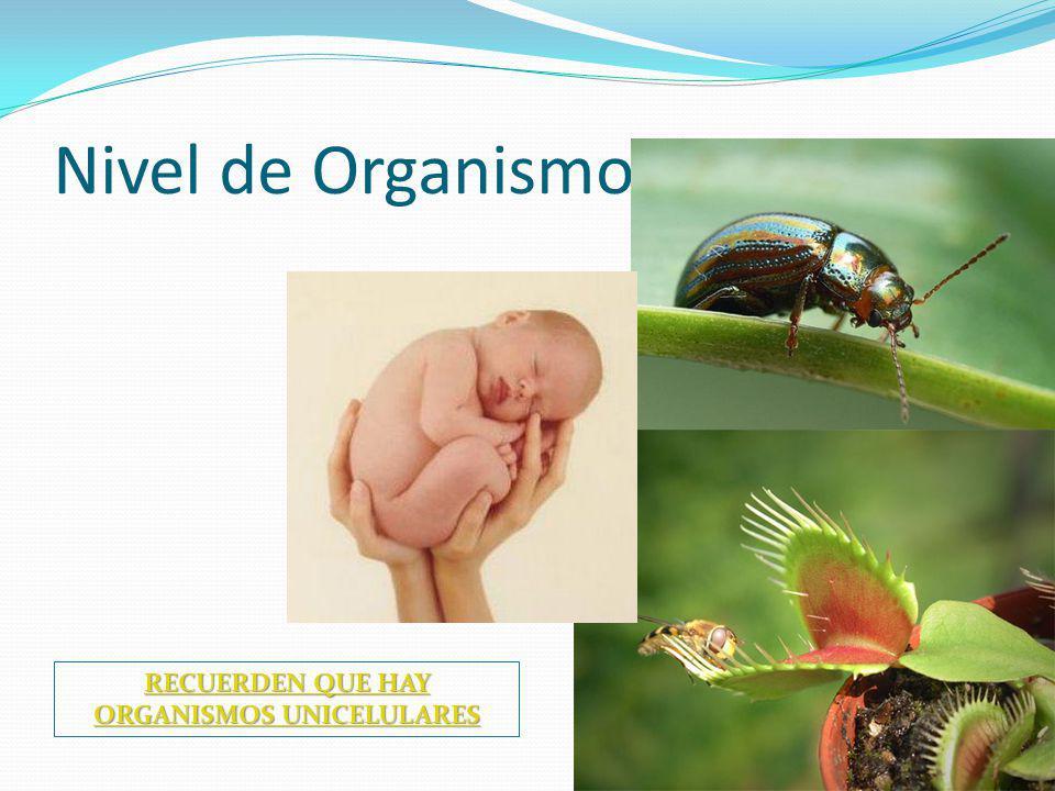 RECUERDEN QUE HAY ORGANISMOS UNICELULARES