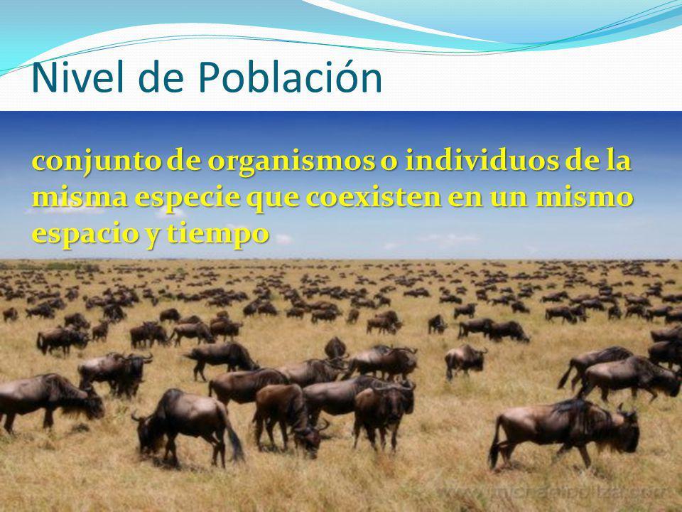 Nivel de Población conjunto de organismos o individuos de la misma especie que coexisten en un mismo espacio y tiempo.