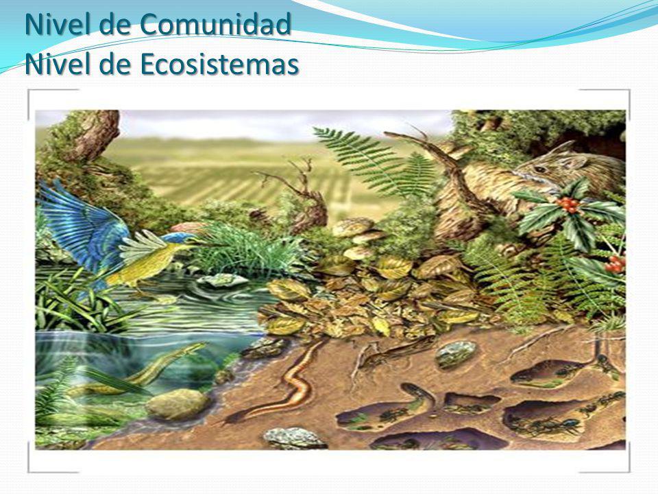 Nivel de Comunidad Nivel de Ecosistemas