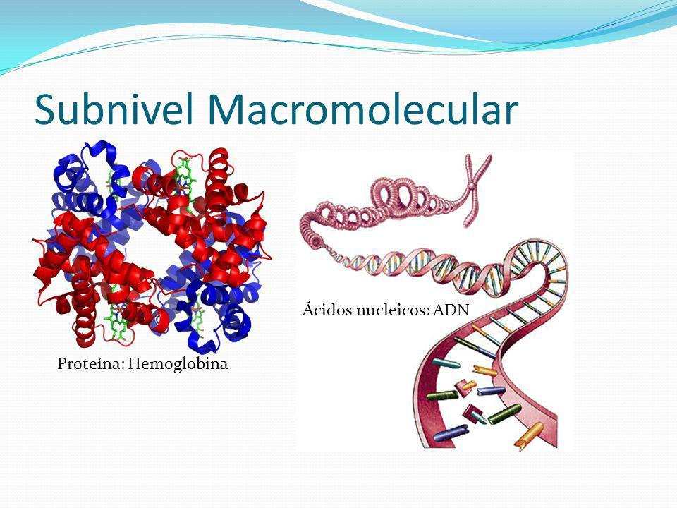 Subnivel Macromolecular
