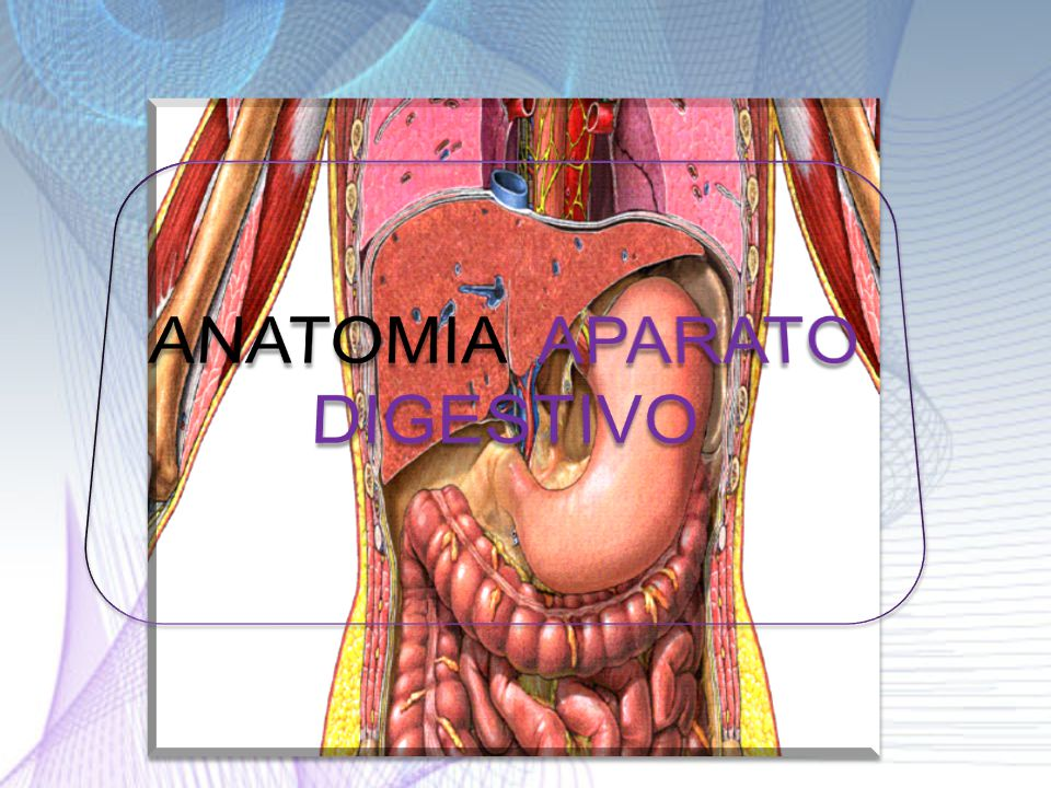 ANATOMIA APARATO DIGESTIVO - ppt video online descargar