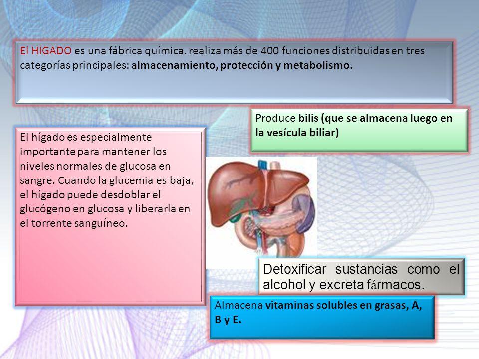 Detoxificar sustancias como el alcohol y excreta fármacos.