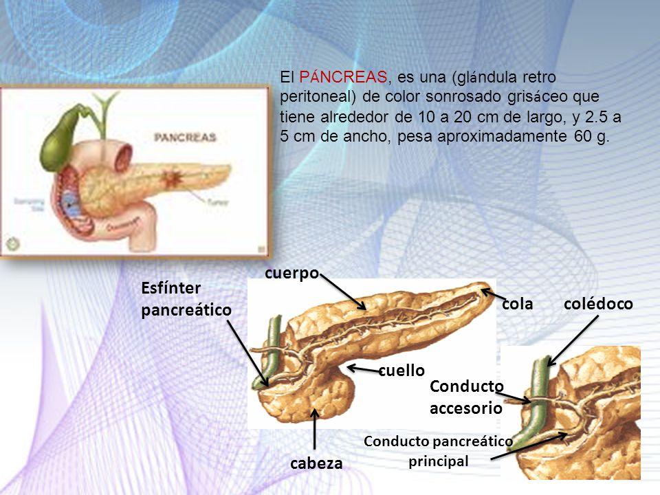 Conducto pancreático principal