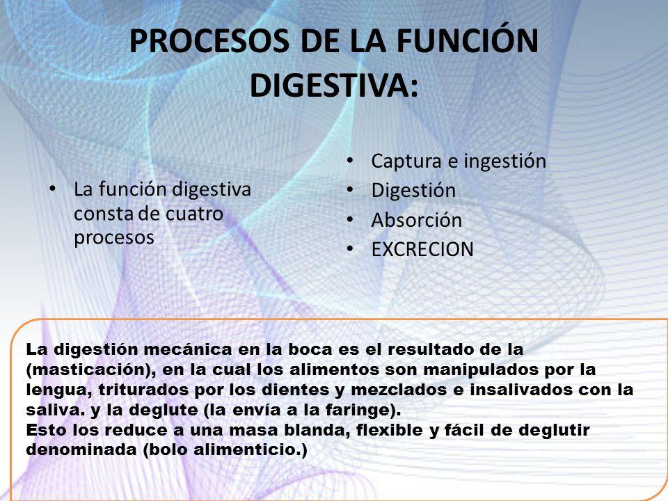 PROCESOS DE LA FUNCIÓN DIGESTIVA: