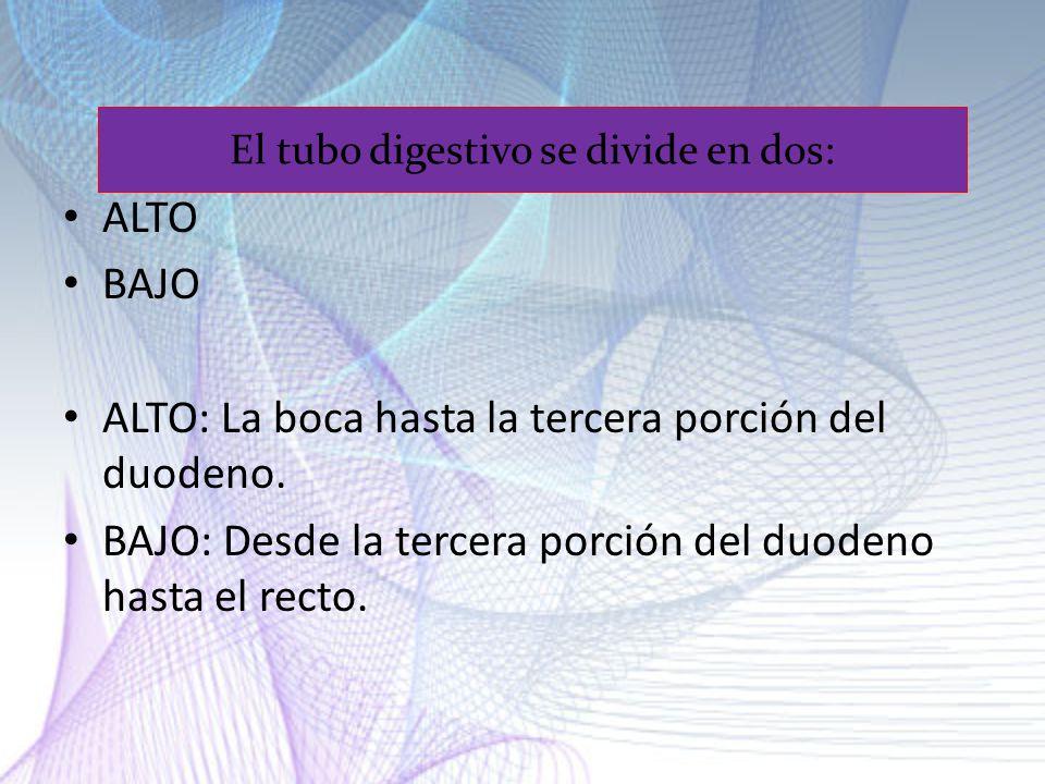 El tubo digestivo se divide en dos: