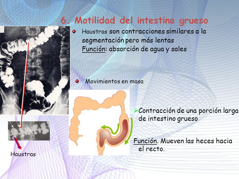 6. Motilidad del intestino grueso