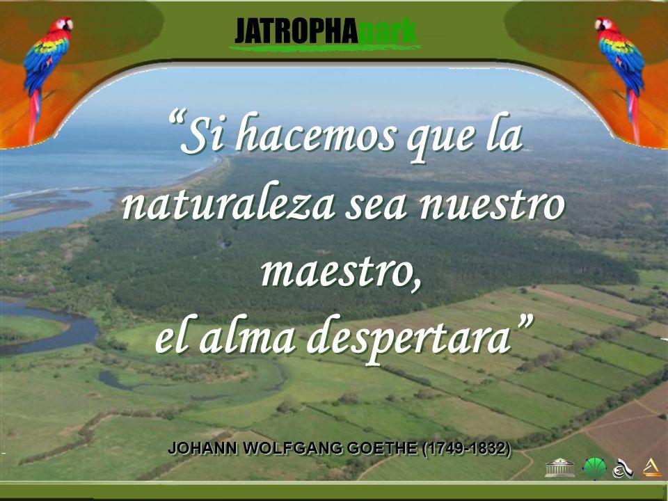 Si hacemos que la naturaleza sea nuestro maestro,