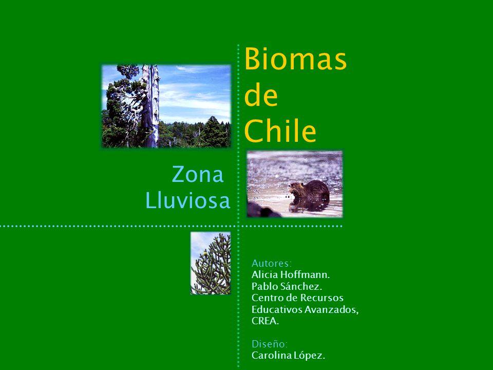 Biomas de Chile Zona Lluviosa Autores: Alicia Hoffmann. Pablo Sánchez.