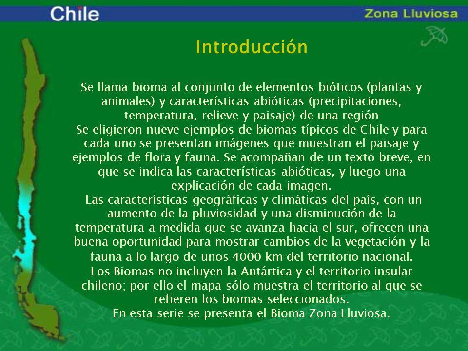 En esta serie se presenta el Bioma Zona Lluviosa.