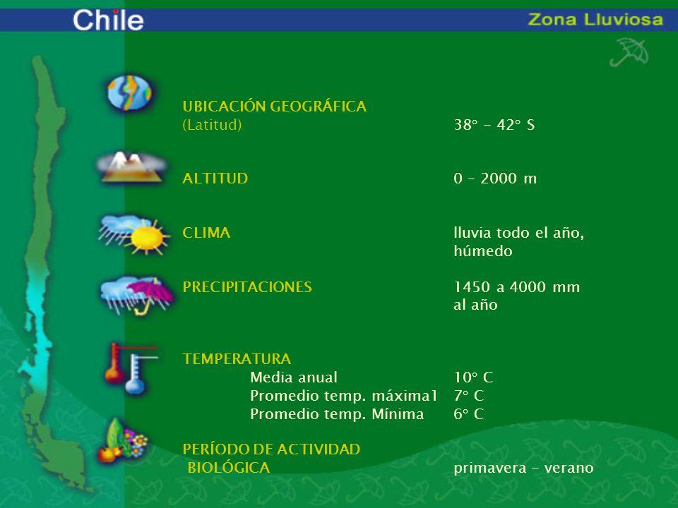 UBICACIÓN GEOGRÁFICA (Latitud). 38° - 42° S ALTITUD. 0 – 2000 m CLIMA