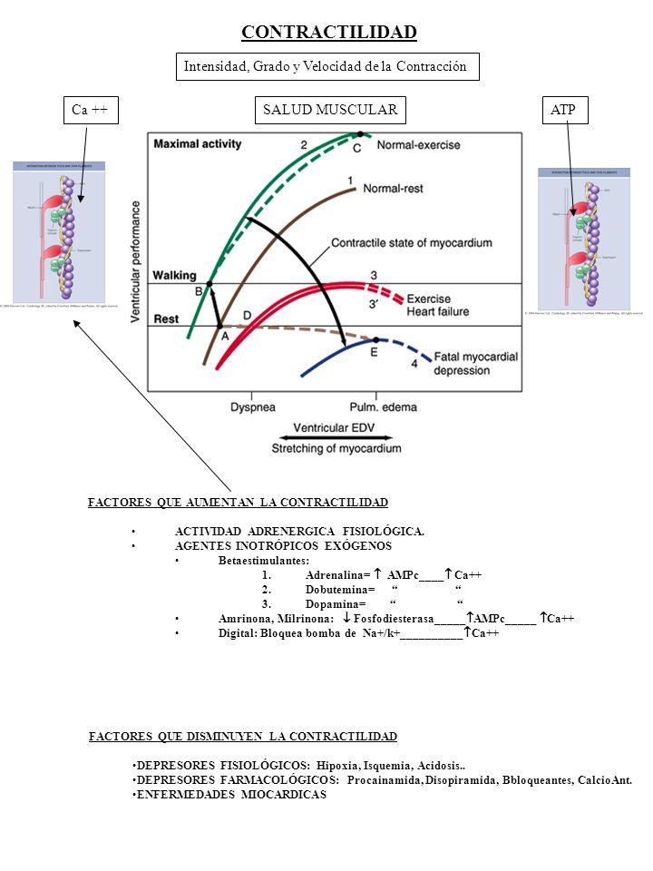 CONTRACTILIDAD Intensidad, Grado y Velocidad de la Contracción Ca ++