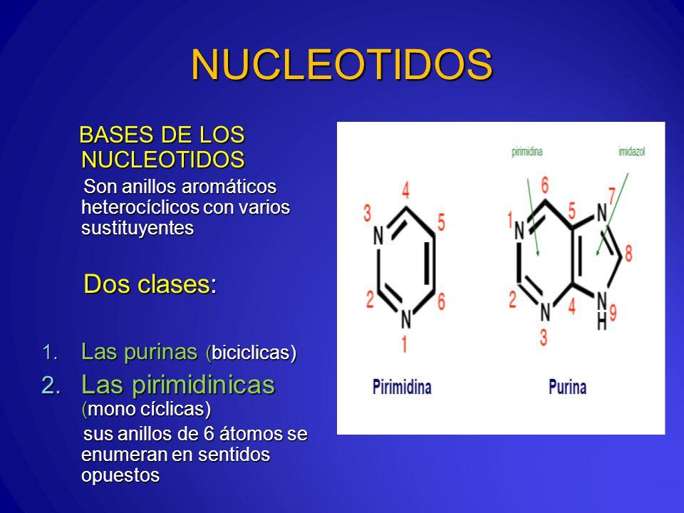 NUCLEOTIDOS Las pirimidinicas (mono cíclicas) BASES DE LOS NUCLEOTIDOS