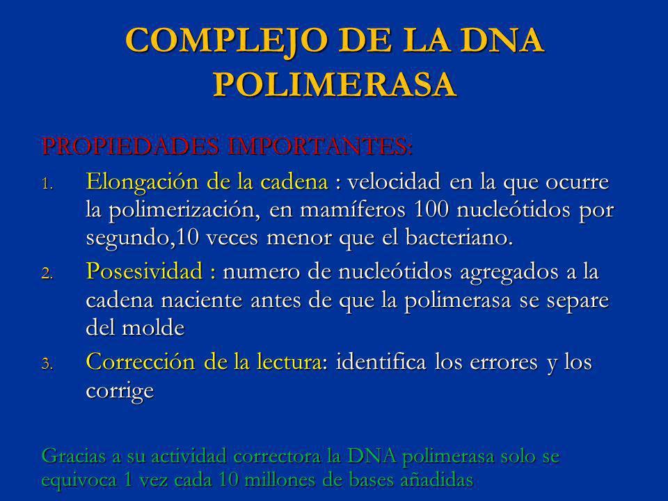 COMPLEJO DE LA DNA POLIMERASA