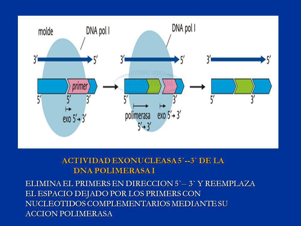 ACTIVIDAD EXONUCLEASA 5`--3` DE LA DNA POLIMERASA I