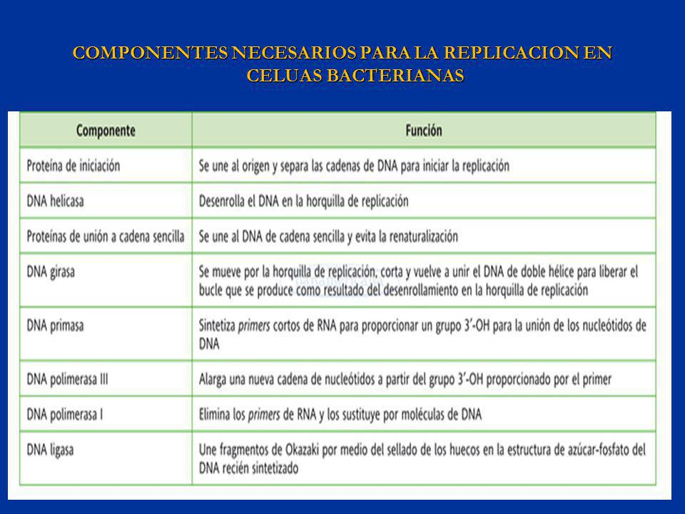 COMPONENTES NECESARIOS PARA LA REPLICACION EN CELUAS BACTERIANAS