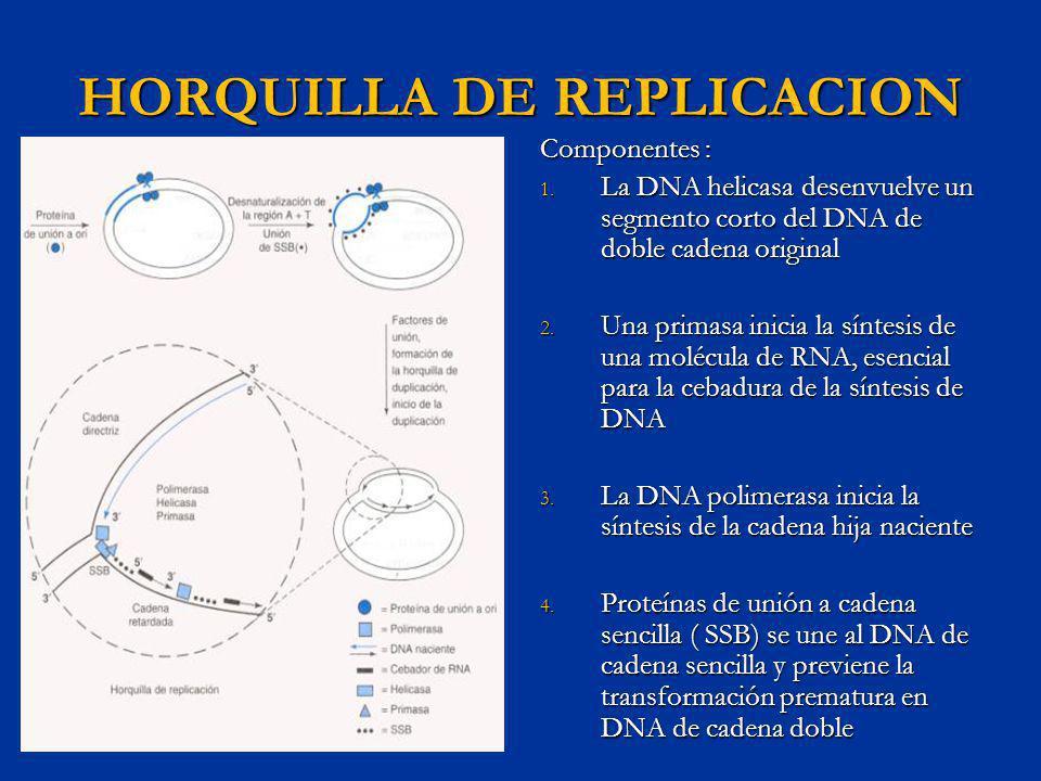 HORQUILLA DE REPLICACION