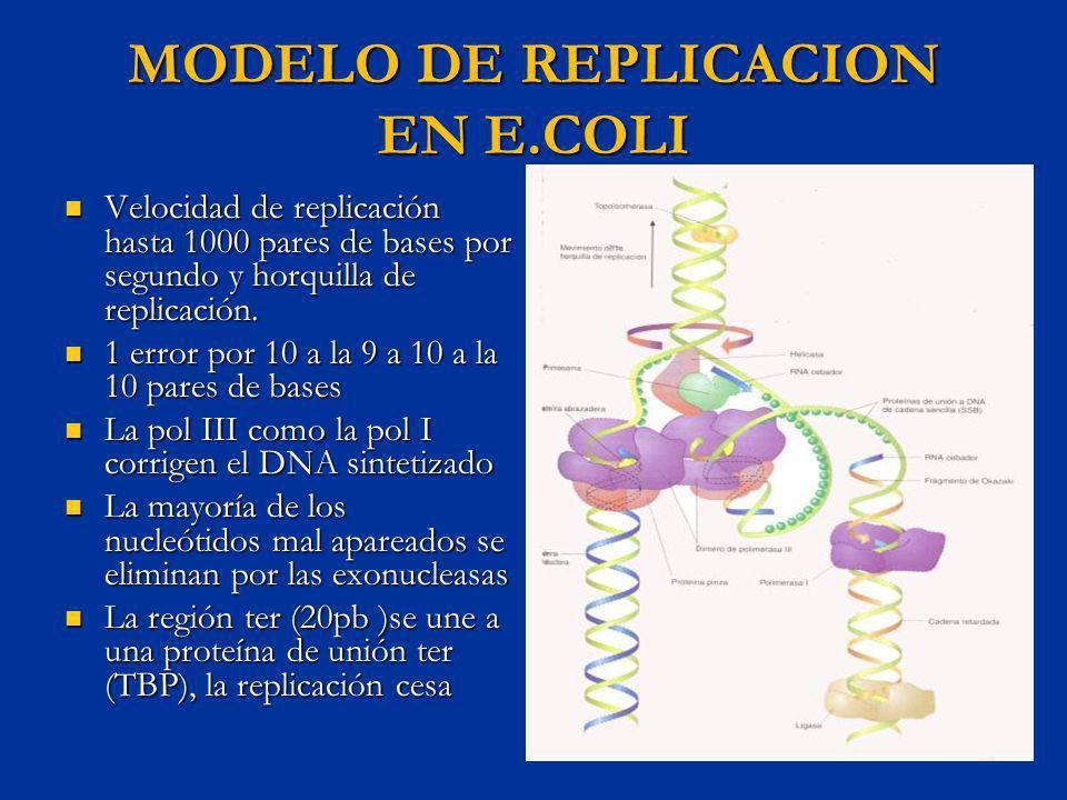 MODELO DE REPLICACION EN E.COLI