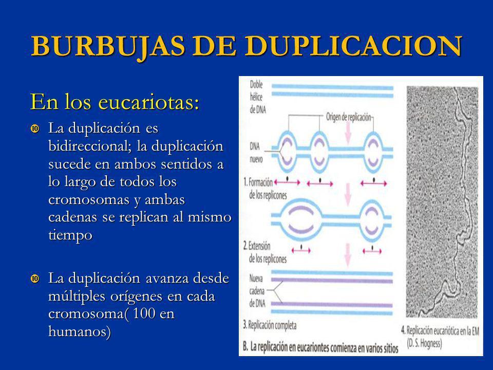 BURBUJAS DE DUPLICACION