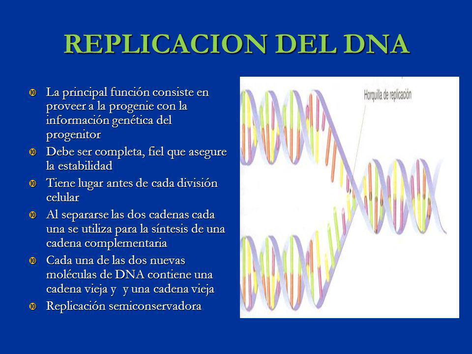 REPLICACION DEL DNA La principal función consiste en proveer a la progenie con la información genética del progenitor.
