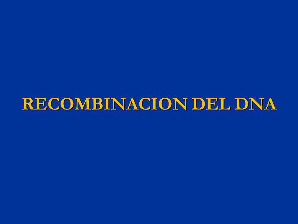 RECOMBINACION DEL DNA
