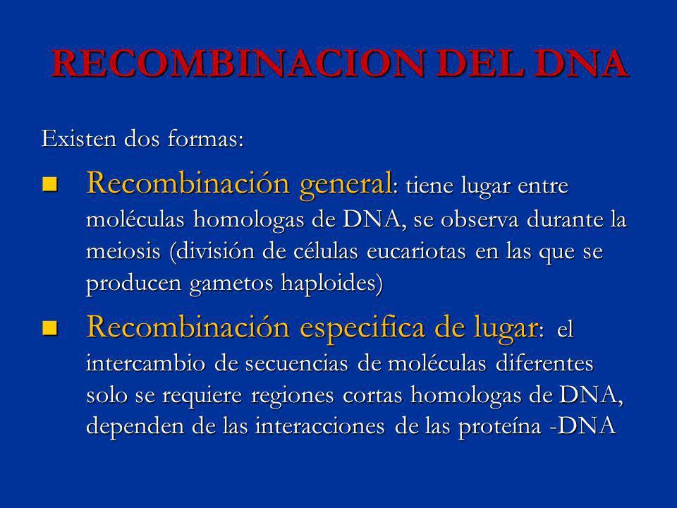 RECOMBINACION DEL DNA Existen dos formas: