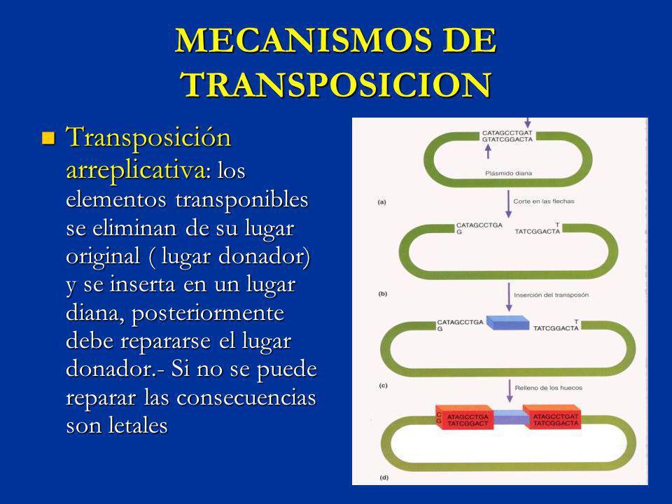 MECANISMOS DE TRANSPOSICION