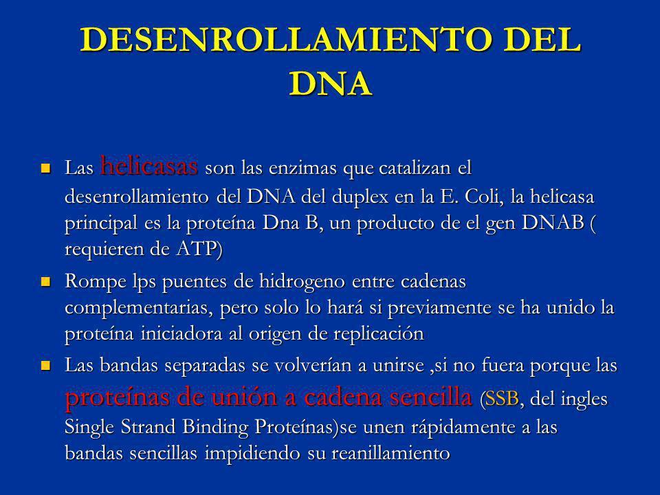 DESENROLLAMIENTO DEL DNA