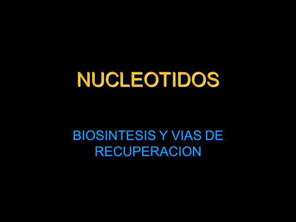 BIOSINTESIS Y VIAS DE RECUPERACION