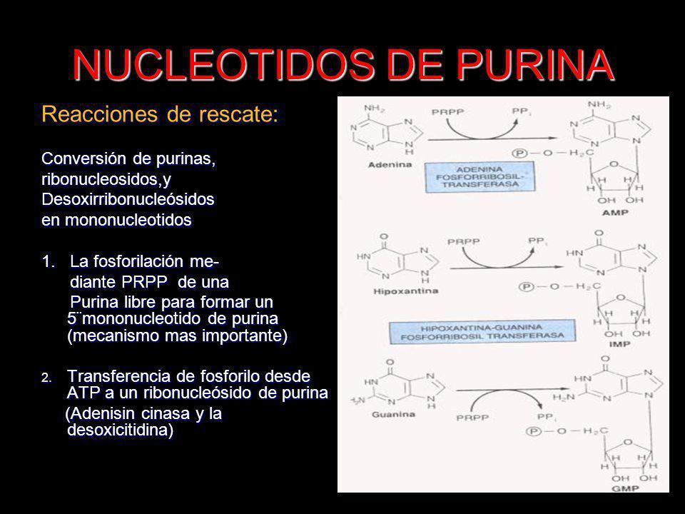 NUCLEOTIDOS DE PURINA Reacciones de rescate: Conversión de purinas,