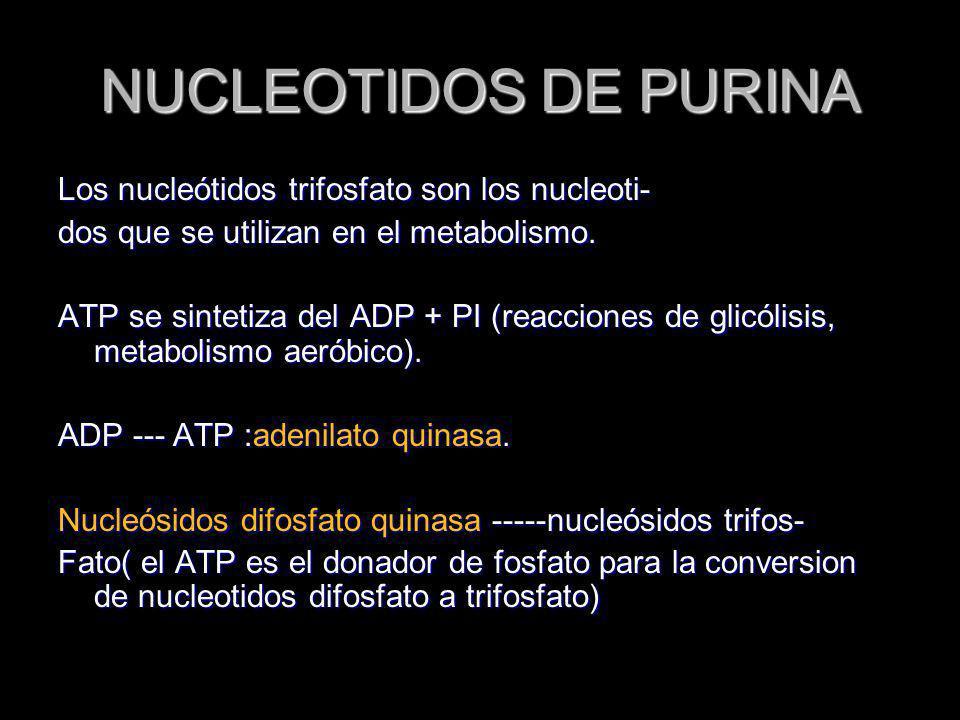 NUCLEOTIDOS DE PURINA Los nucleótidos trifosfato son los nucleoti-