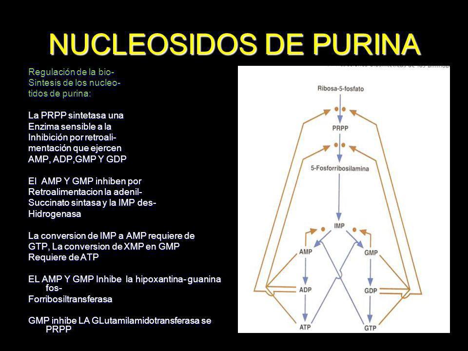 NUCLEOSIDOS DE PURINA Regulación de la bio- Sintesis de los nucleo-
