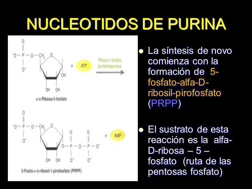 NUCLEOTIDOS DE PURINA La síntesis de novo comienza con la formación de 5-fosfato-alfa-D- ribosil-pirofosfato (PRPP)