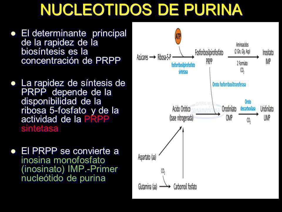 NUCLEOTIDOS DE PURINA El determinante principal de la rapidez de la biosíntesis es la concentración de PRPP.