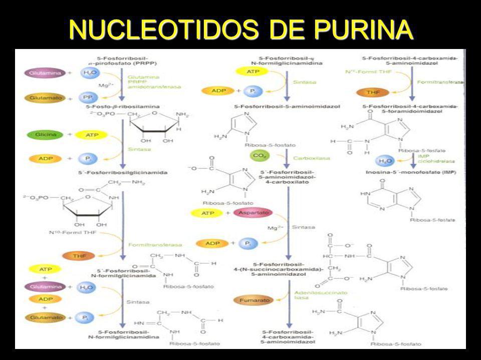 NUCLEOTIDOS DE PURINA
