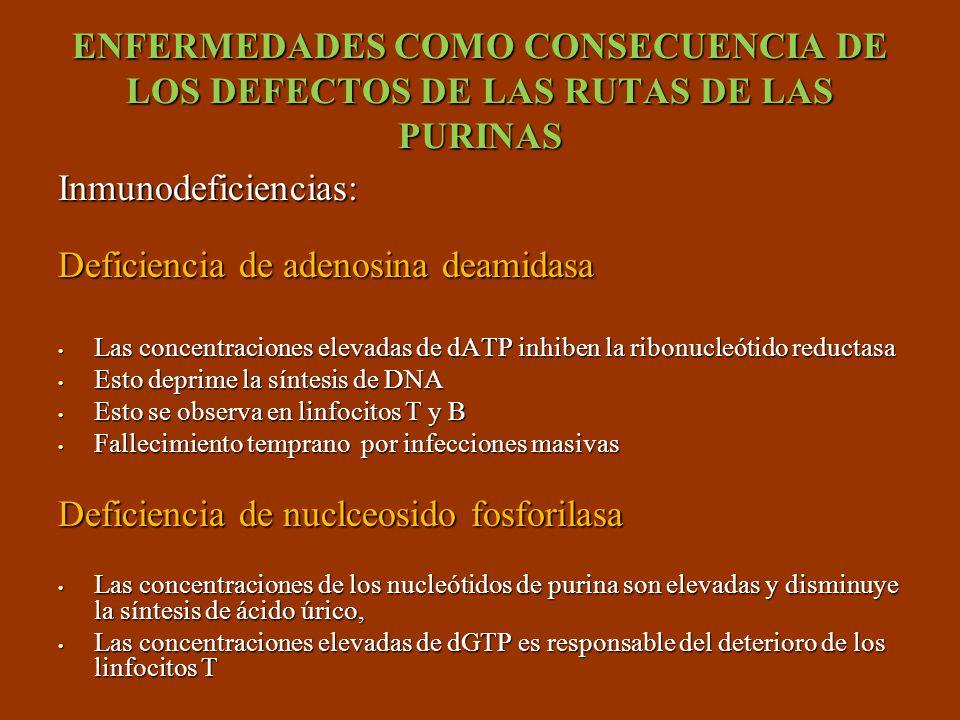 Deficiencia de adenosina deamidasa