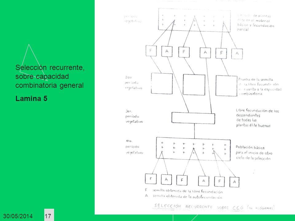 Selección recurrente, sobre capacidad combinatoria general