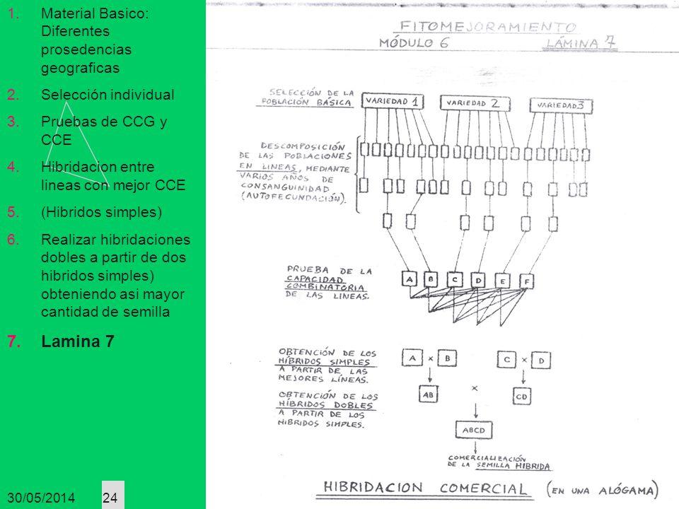 Lamina 7 Material Basico: Diferentes prosedencias geograficas