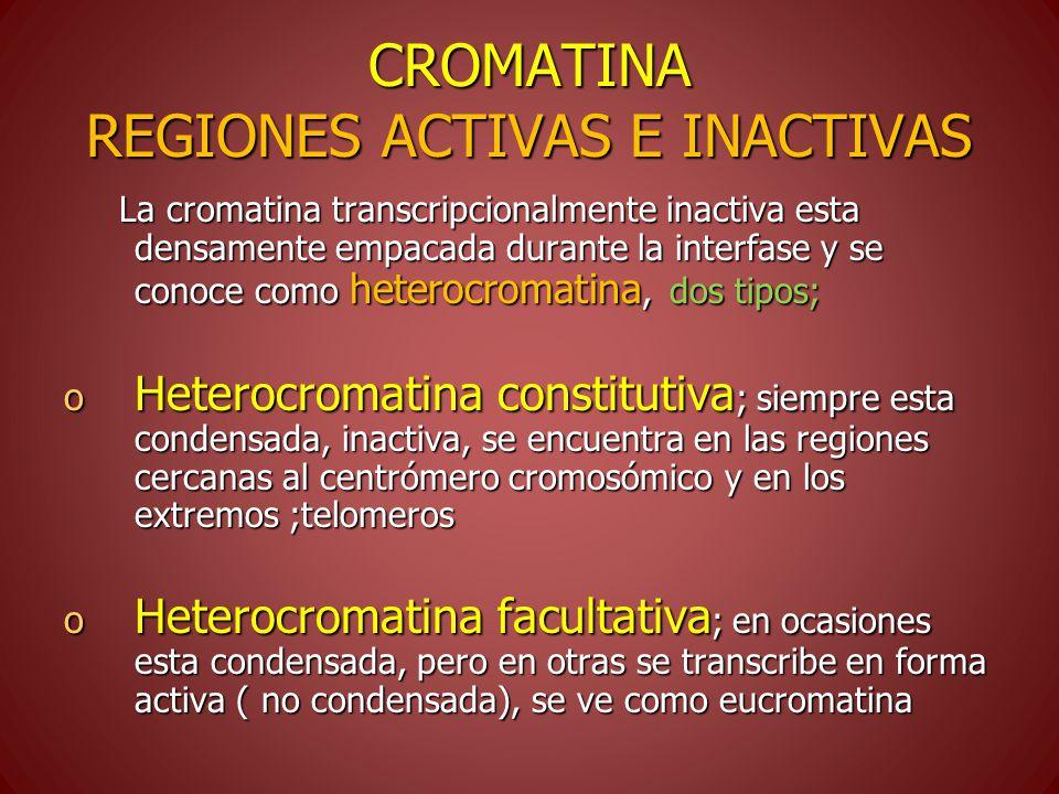 CROMATINA REGIONES ACTIVAS E INACTIVAS