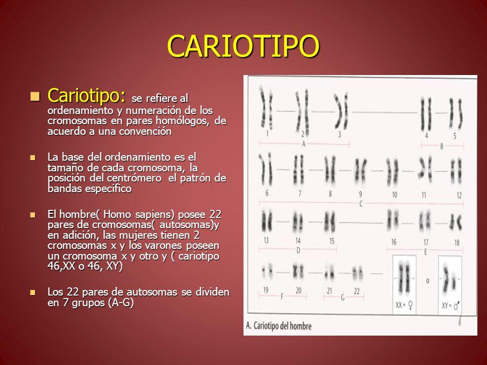 CARIOTIPO Cariotipo: se refiere al ordenamiento y numeración de los cromosomas en pares homólogos, de acuerdo a una convención.