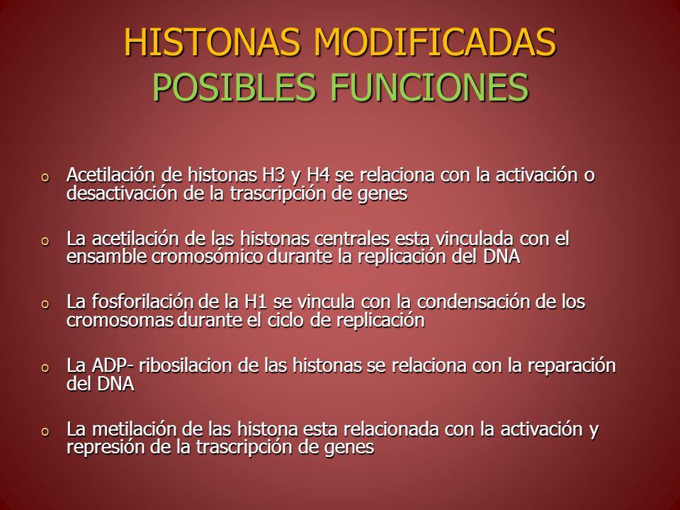 HISTONAS MODIFICADAS POSIBLES FUNCIONES