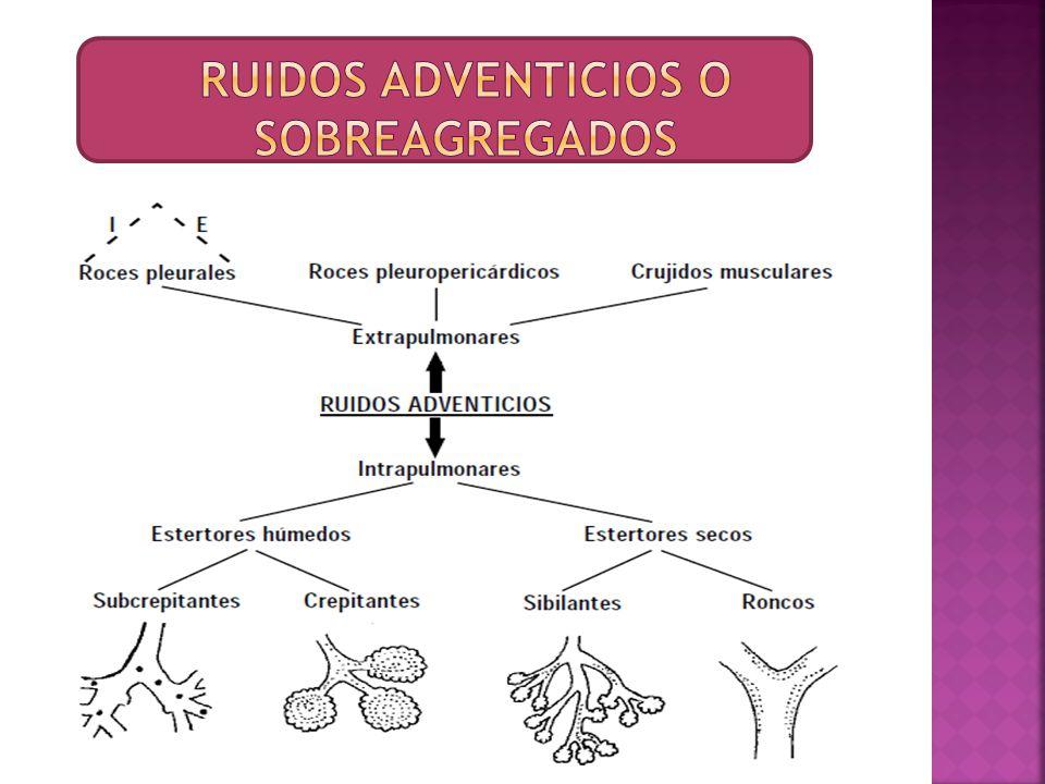 RUIDOS ADVENTICIOS O SOBREAGREGADOS
