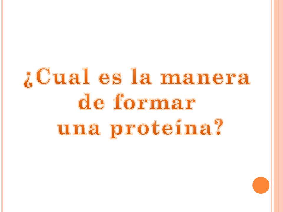 ¿Cual es la manera de formar una proteína