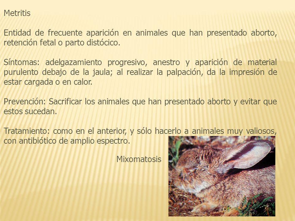 Metritis Entidad de frecuente aparición en animales que han presentado aborto, retención fetal o parto distócico.