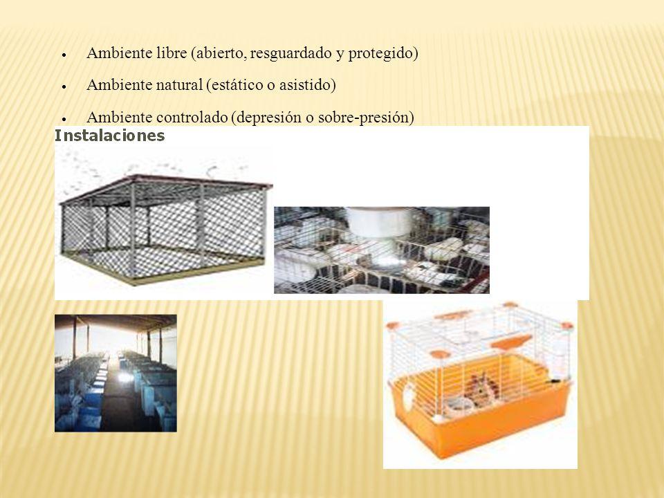 Ambiente libre (abierto, resguardado y protegido)