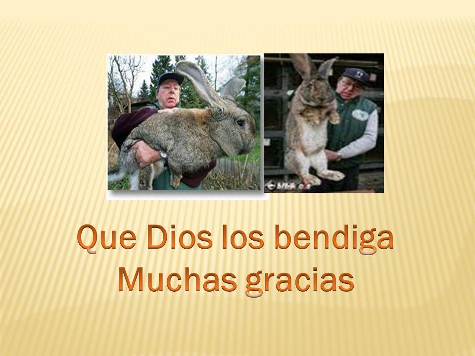 Que Dios los bendiga Muchas gracias