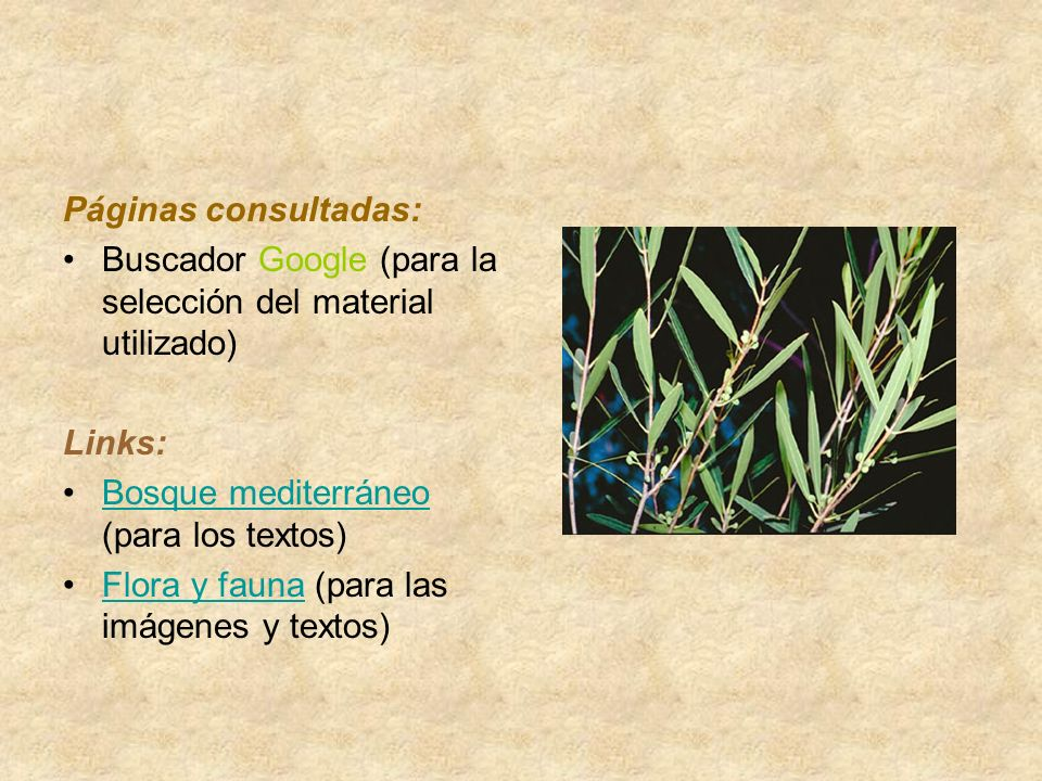 Páginas consultadas: Buscador Google (para la selección del material utilizado) Links: Bosque mediterráneo (para los textos)